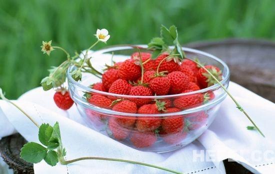草莓的果实结构图